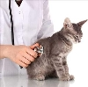Ветеринарные клиники в Октябрьском